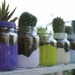 barattoli vetro_piante