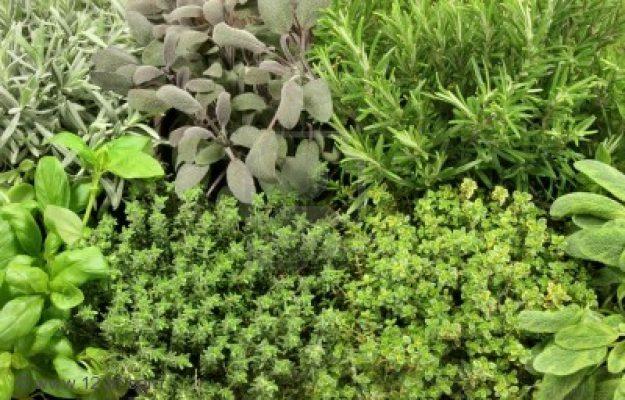 riimedi prova costume erbe aromatiche mamme a spillo
