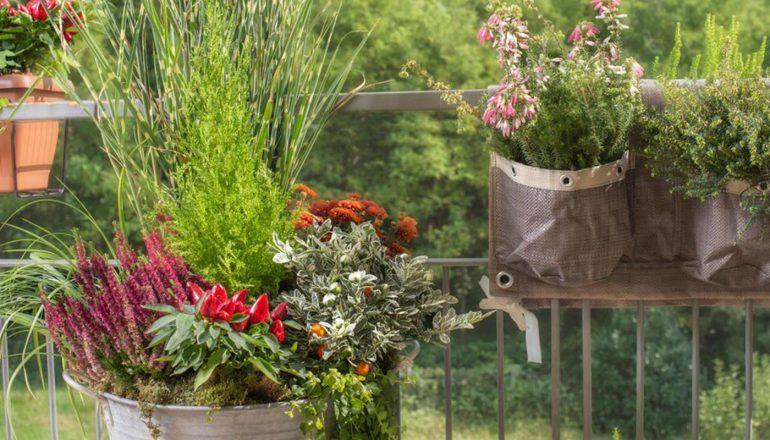 Balcone d\'Autunno: le 10 piante più belle da coltivare a Settembre