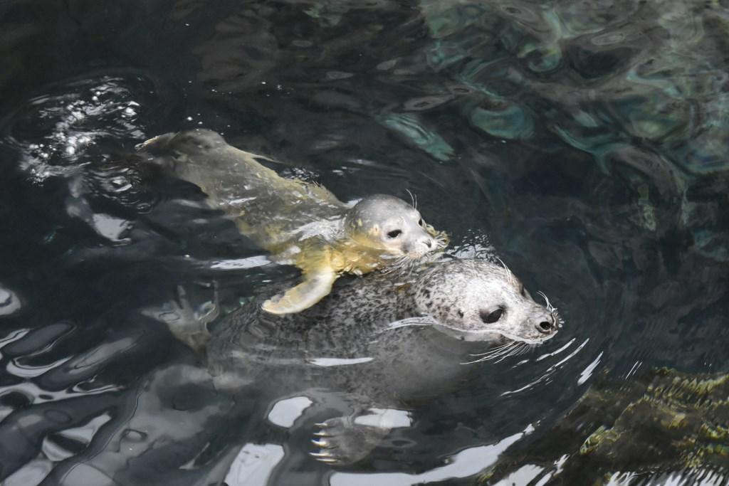 baffo-acquario-genova
