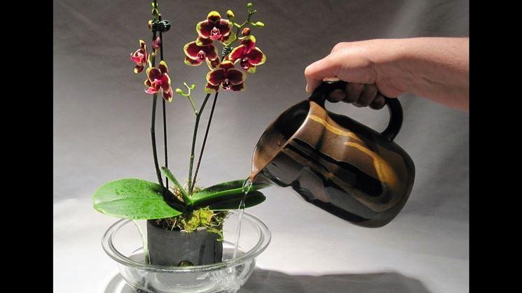 Voglia Di Fiori E Curare Le Orchidee Per Un Terrazzo