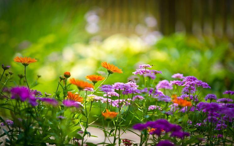 Un giardino estivo coloratissimo: i fiori da coltivare ora in vista